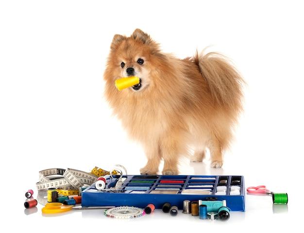 Acessórios de costura e cachorrinho na frente
