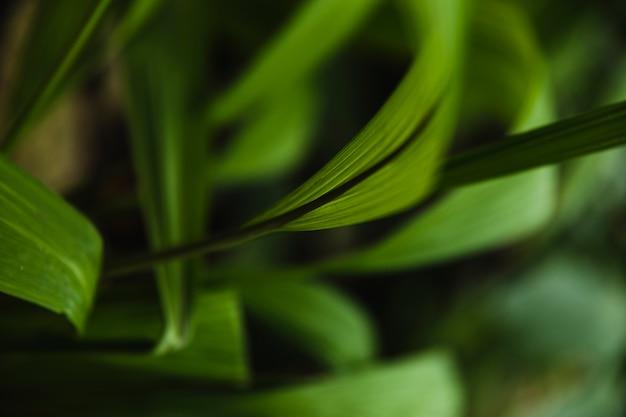 Acima da grama de junça