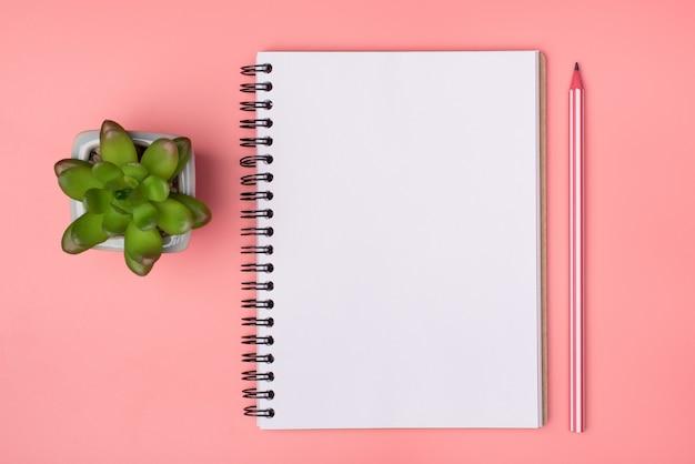 Acima, foto de visão aérea de lápis de caderno e uma suculenta isolada em um fundo de cor rosa pastel com copyspace em branco vazio