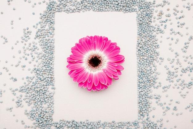Acima vista arranjo com seixos e flores