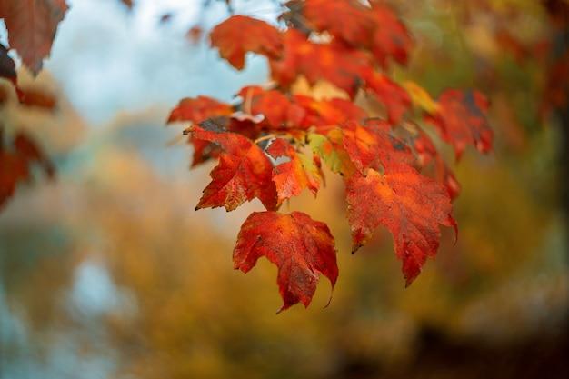Acima vista das folhas amarelas outonais nas árvores