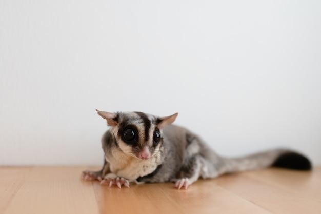 Açucareiro pequeno bonitinho na mesa de madeira e fundo de parede branca.