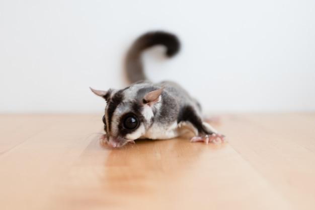 Açucareiro pequeno bonitinho na mesa de madeira e parede branca.