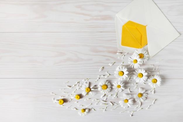 Adivinhação romântica sobre o amor nas flores de camomila.