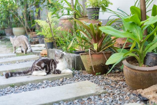 Adoráveis, dois, cute, pequeno, gatos, com, bonito, olhos amarelos, tocando, em, jardim, ao ar livre