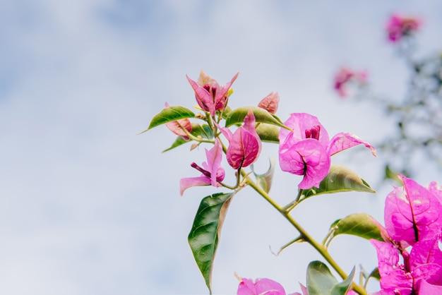 Adoráveis flores cor de rosa