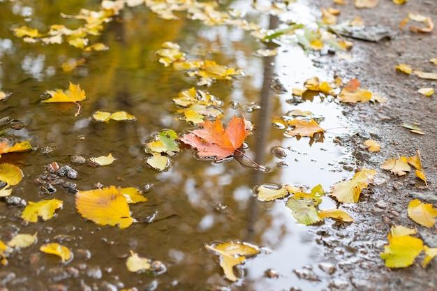 Adoráveis folhas amarelas flutuando na superfície da água