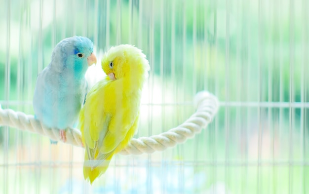 Adoráveis pequenos papagaios sentados juntos na gaiola de stringin.