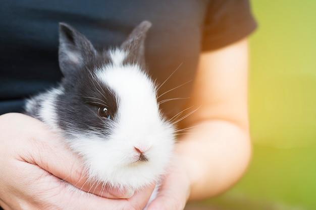 Adorável bebê 2 semanas coelho tailandês na mão da senhora