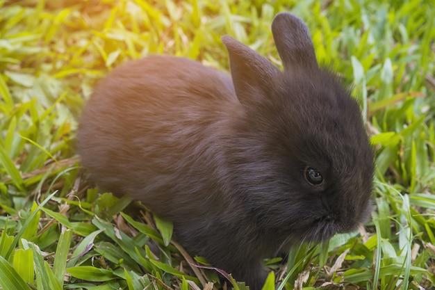 Adorável bebê 2 semanas coelho tailandês