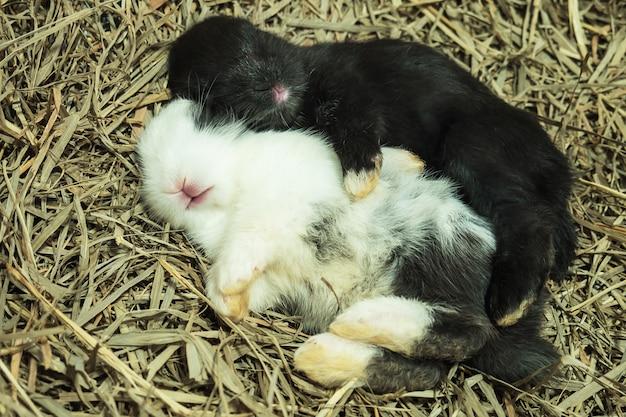 Adorável bebê coelho no berço de feno