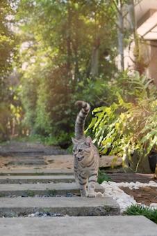 Adorável bonito gato tubby com belos olhos amarelos andar no caminho de pedra no jardim ao ar livre
