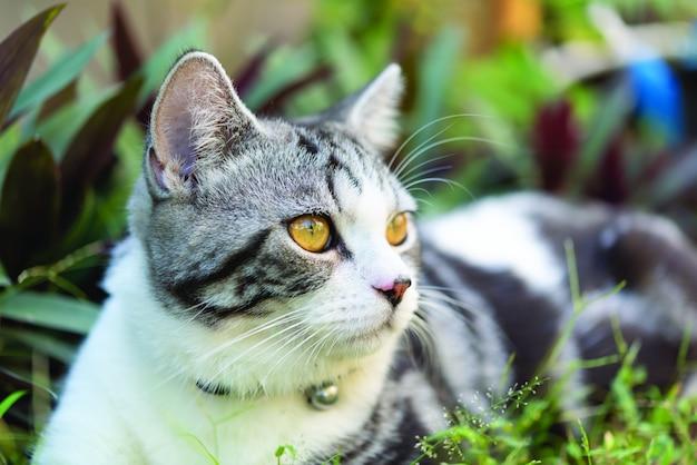 Adorável bonito tubby cat