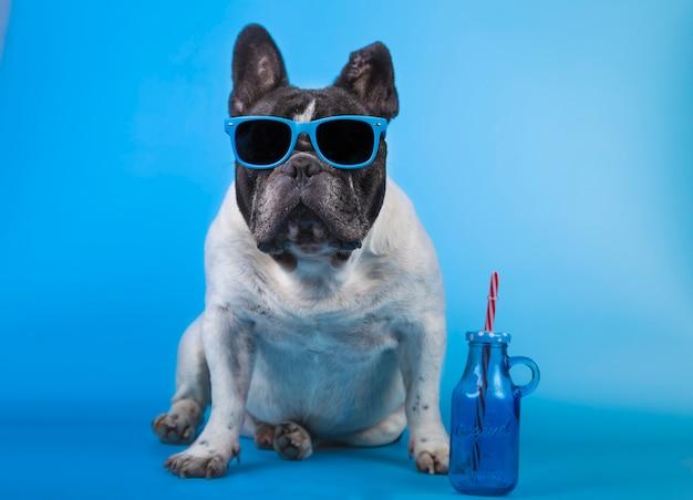 Adorável buldogue francês com óculos de verão