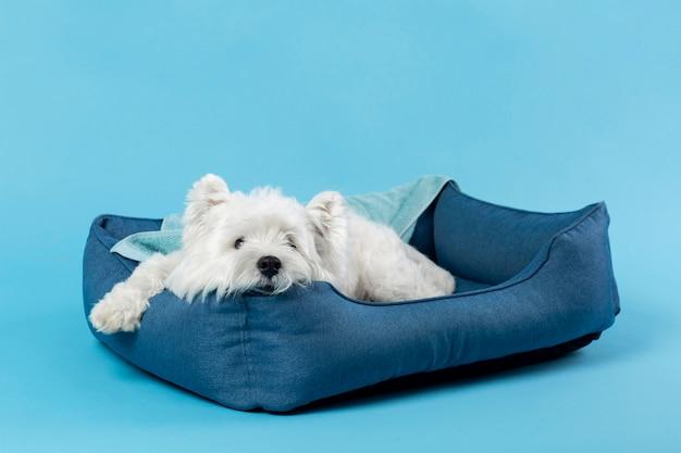 Adorável cachorrinho branco
