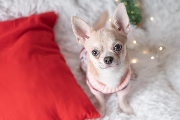 Adorável cachorrinho de natal com suéter