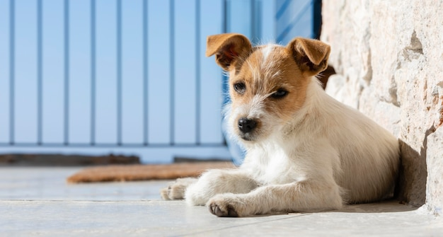 Adorável cachorro ao ar livre