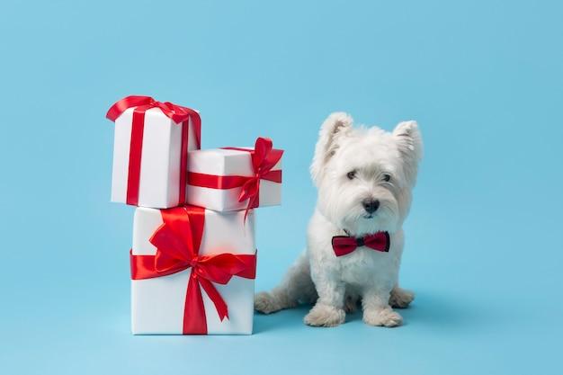 Adorável cachorro branco com presentes