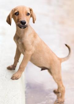 Adorável cachorro no abrigo posando no degrau