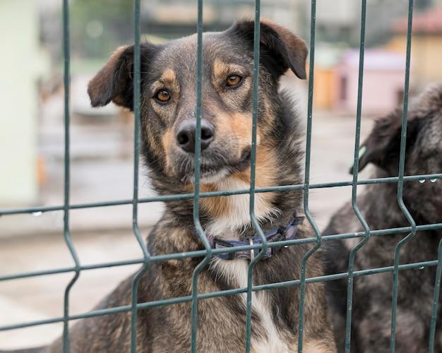 Adorável cachorro sendo curioso atrás da cerca no abrigo