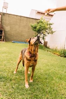 Adorável cão a posar no jardim