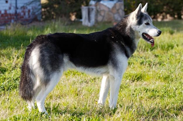 Adorável cão no jardim de uma casa