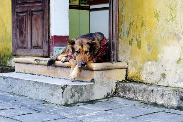Adorável cão vestindo camisa sentado à porta
