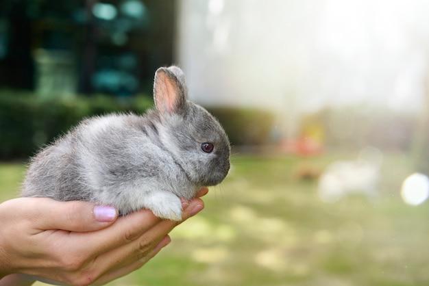Adorável coelho desequilibrado nas mãos. coelho de estimação bonito sendo abraçado por seu dono. conceito de amor pelos animais.