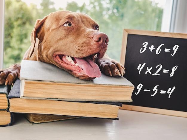 Adorável e adorável cachorrinho cor chocolate e livros antigos. close-up, fundo isolado. foto de estúdio, luz do dia. conceito de cuidado, educação, treinamento de obediência e criação de animais de estimação