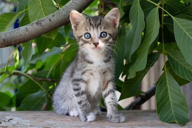 Adorável e curioso gatinho malhado brincando vigorosamente no jardim na grama.