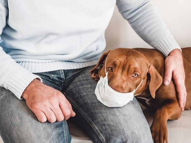 Adorável e encantador cachorrinho e seu dono carinhoso.