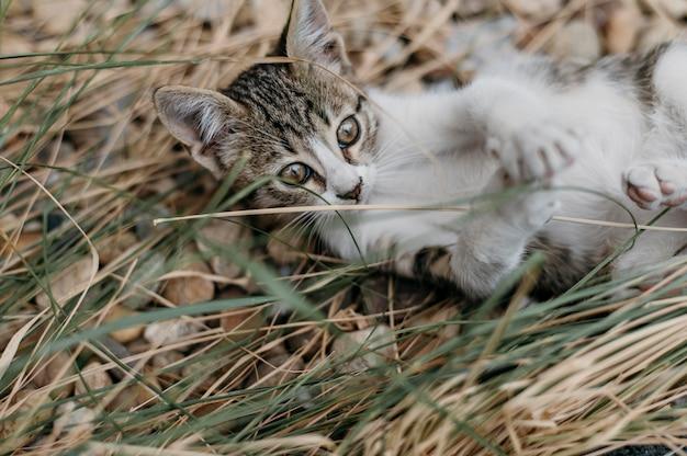 Adorável gatinho brincando ao ar livre