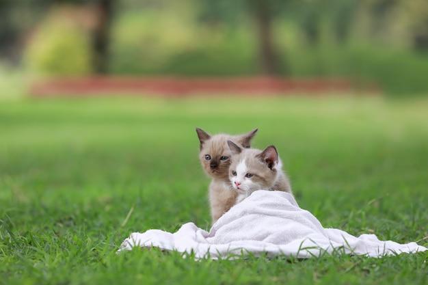 Adorável gatinho sentado na grama verde no parque.