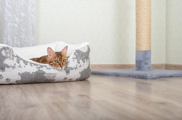 Adorável gato de bengala descansando em uma cama branca de gato na sala de estar