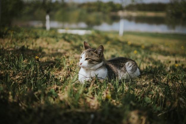 Adorável gato doméstico em um campo de grama e flores