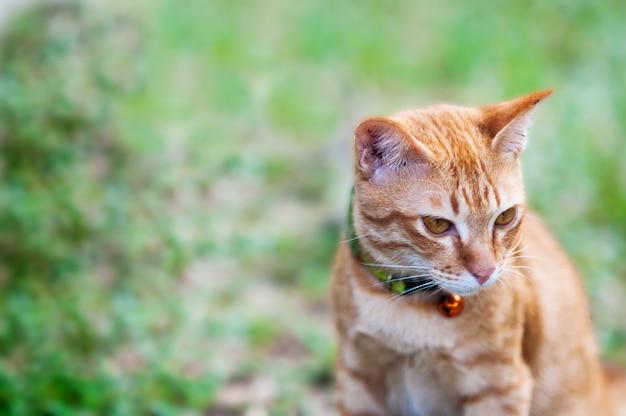 Adorável gato doméstico marrom no jardim verde