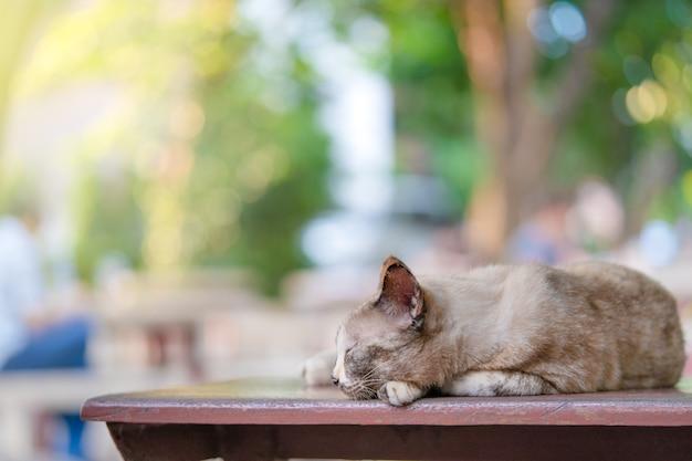 Adorável gato dorme em cima da mesa