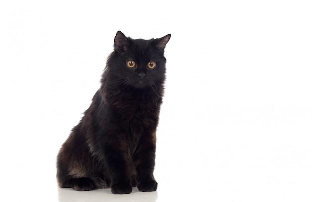 Adorável gato persa preto