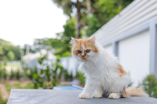 Adorável gato persa relaxando ao ar livre