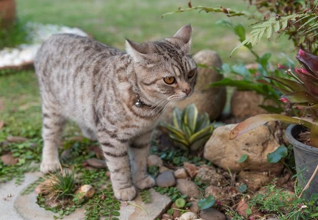 Adorável gato saudável com lindos olhos amarelos na grama verde fresca ao ar livre na manhã