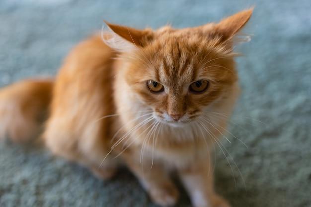 Adorável gato sentado no chão da cozinha, olhando para a câmera.