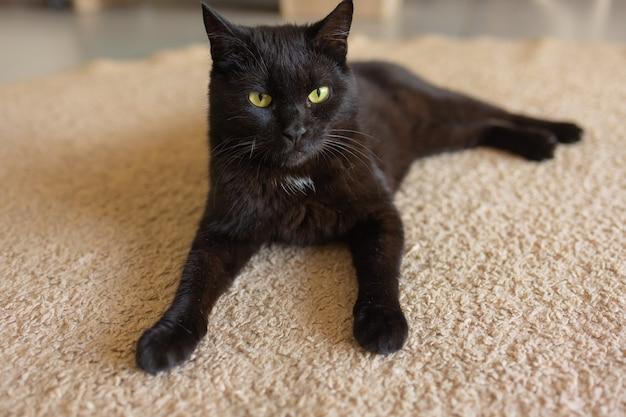 Adorável gato tigrado sentado no chão da cozinha olhando para a câmera