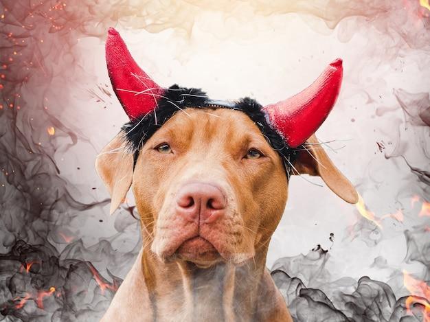 Adorável, lindo cachorrinho de cor marrom. close-up, ao ar livre. luz do dia. conceito de cuidado, educação, treinamento de obediência e criação de animais de estimação