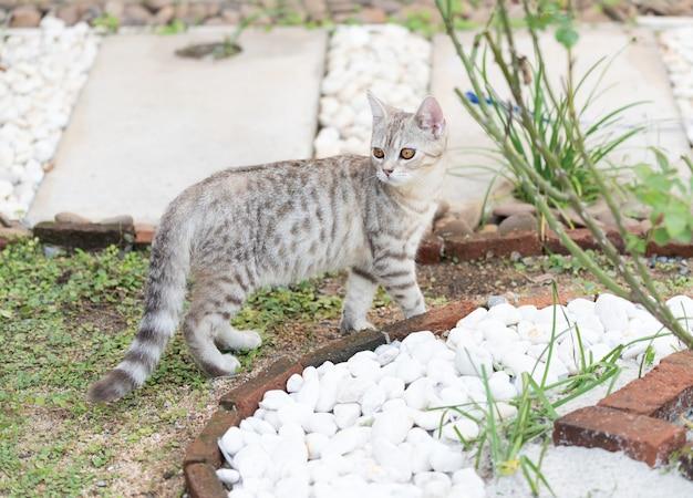 Adorável lindo gato tubby com belos olhos amarelos na grama no jardim ao ar livre