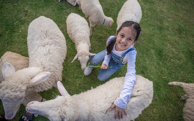 Adorável menina e ovelhas