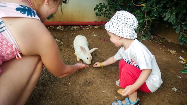 Adorável menino com uma jovem mãe alimentando o lindo coelho branco de mão no zoológico