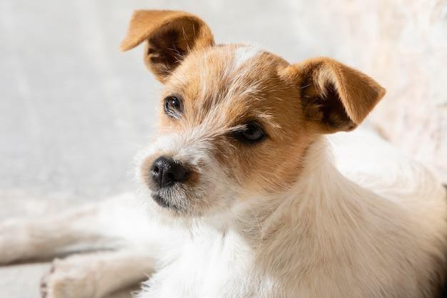 Adorável retrato de cachorro de alto ângulo