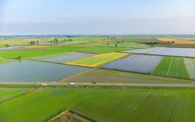 Aérea: arrozais, campos agrícolas cultivados inundados rural rural italiano, ocupação agrícola, sprintime no piemonte, itália