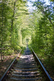 Afinador verde na floresta. lugar de amor.