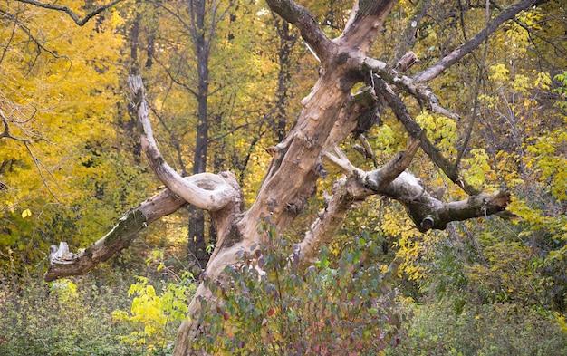 Agarrar velhas árvores secas nas folhas verdes da floresta